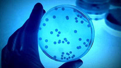 carmenta-biotecnologia.jpg